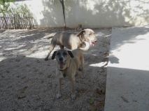 New friend at Playa del Carmen's Dog Holiday