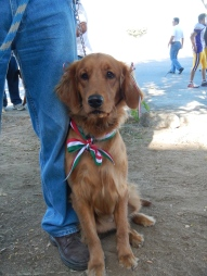 Golden in a parade in La Paz, Mexico