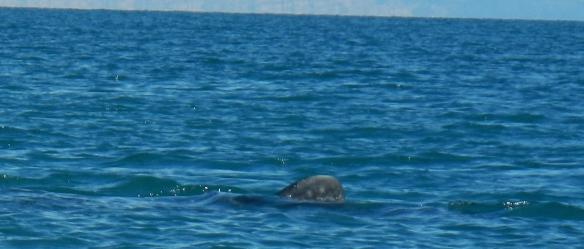 Whale dorsal fin