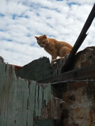 Cat on fence, La Paz, Mexico