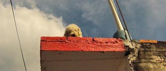 Watch dog, San Blas, Mexico