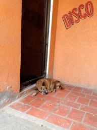 Disco Nap in La Paz, Mexico