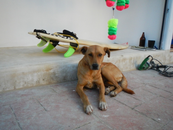 Sayulita surf dog