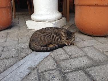Senor Gato in Manzanillo, Mexico