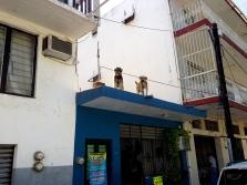 Manzanillo, dos watch dogs