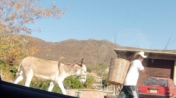 Man and donkey walking down the road