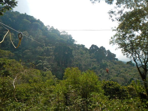 Zip lining through the jungle