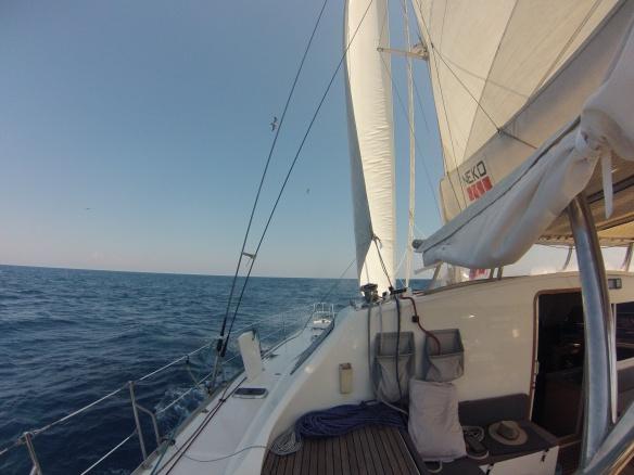 Neko under sail
