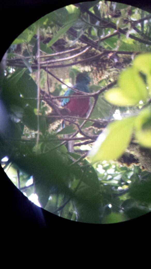 quetzel bird