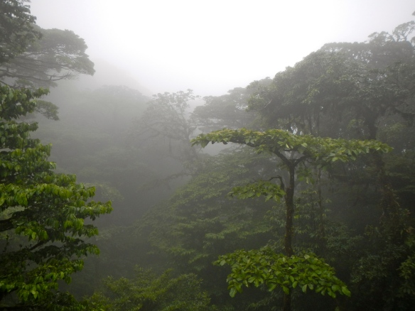 Cloud Forest living up to its name.