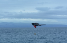 Frigate bird showing off his red pouch to try an attract a mate.