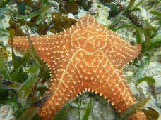 Tons of starfish