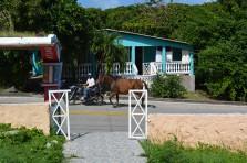 Horse rangler