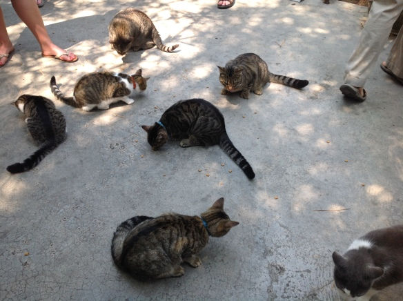 polydactyl cats at the Hemingway House