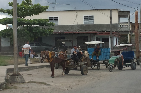 horse and carts