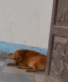 Dog by door