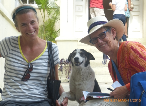 Hemingway house dog welcoming Mary and Charlotte.