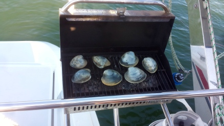 Clams fresh from the bay onto the grill