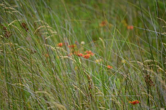 orange wildflowers