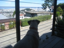 Enjoying her San Francisco view