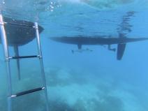 remoras (sucker fish) cleaning the bottom of Neko