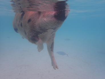 Pigs & Fish