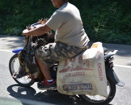 so picture me and Pete and our bag riding with this guy minus the chickens