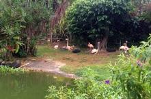 Flamingos at the Jardin