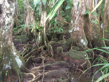 Tree trunks look like ribbons