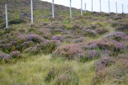 Fields of heather everywhere